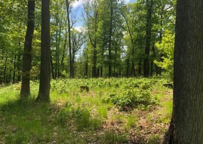 2019-1.5.-Forest-Walking-stezky-Brno-Prehrada-1-z-19-1