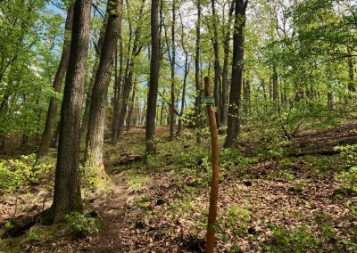 2019-1.5.-Forest-Walking-stezky-Brno-Prehrada-1-z-19-10