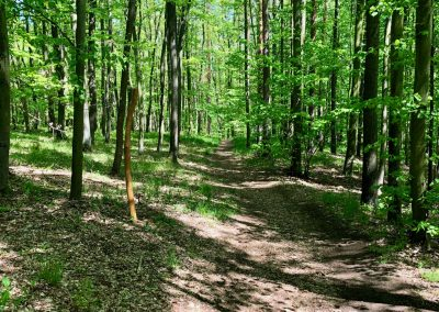 2019-1.5.-Forest-Walking-stezky-Brno-Prehrada-1-z-19-4