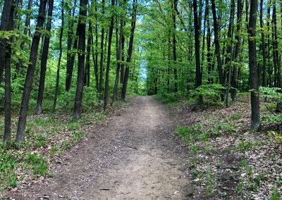 2019-1.5.-Forest-Walking-stezky-Brno-Prehrada-1-z-19-6